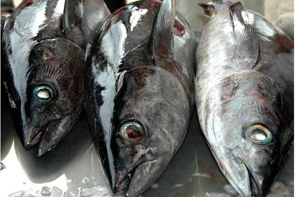 Pháp mở rộng tuần duyên, ngăn chặn tàu Trung Quốc đánh bắt cá trái phép