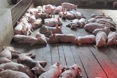 Ninh Bình: Quy hoạch, phát triển các cơ sở chăn nuôi an toàn sinh học, ngăn ngừa dịch bệnh