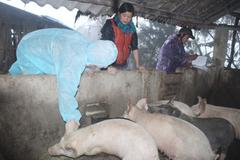 Huyện Văn Lãng rốt ráo phòng chống dịch trên đàn gia súc