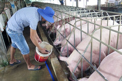 Đảm bảo đúng quy trình vệ sinh môi trường, trước khi tái đàn gia súc