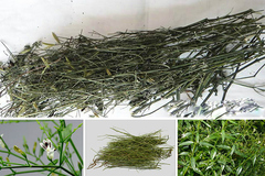 Vị thuốc cổ truyền Việt Nam dùng chữa Covid-19 là cây gì?
