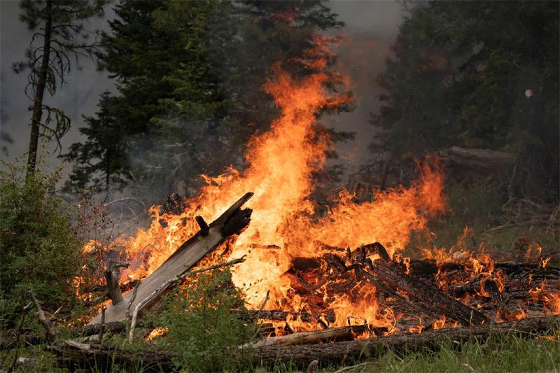 Mỹ, Canada điêu đứng vì 'giặc lửa'