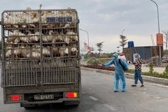 Food surplus in southern provinces, shortage in HCM City