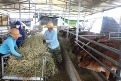 Than Uyên phát triển chăn nuôi tập trung đại gia súc theo hướng an toàn dịch bệnh