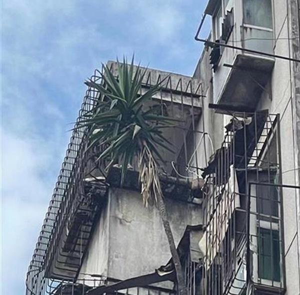 Cư dân hốt hoảng với mối nguy treo trên đầu từ căn hộ bỏ hoang 6 năm