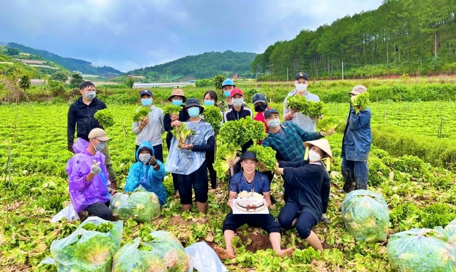 'Bữa tiệc sinh nhật' trên cánh đồng rau ở Lâm Đồng