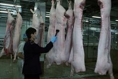 Nghệ An quản chặt giết mổ gia súc để phòng, ngừa nguy cơ lây lan dịch bệnh