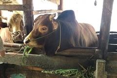 Quản Bạ: Hộ chăn nuôi gia súc tăng cường vệ sinh chuồng trại, chống dịch bệnh xâm nhiễm