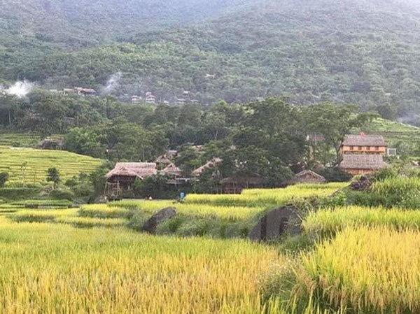 Thanh Hoa travel,terraced fields