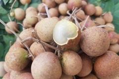 1.300 tấn nhãn ế ẩm, nông dân Bà Rịa - Vũng Tàu khóc ròng vì giá chỉ còn 1/3