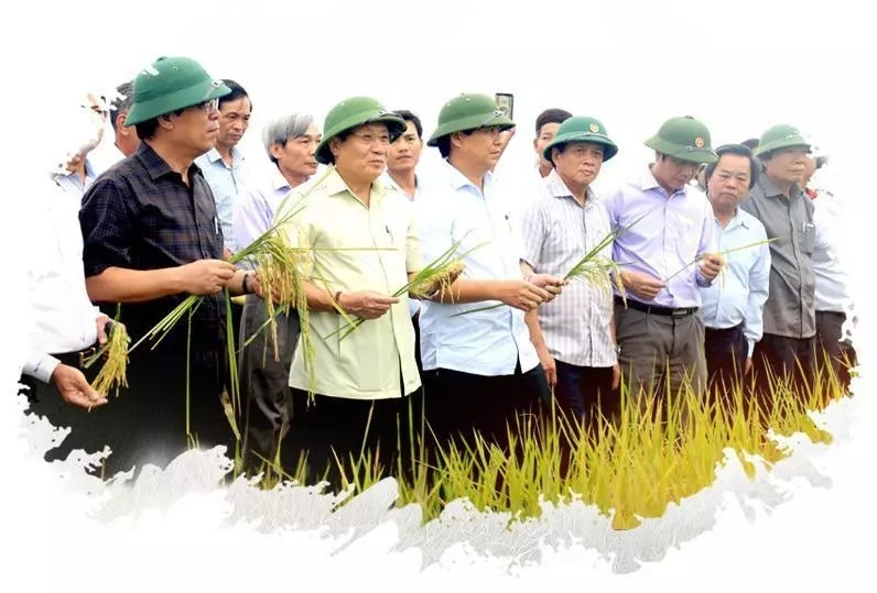 Precious 'super-organic' rice produced from formerly 'dead' fields