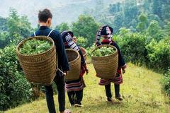 Bắc Quang đầu tư vào nhóm sản phẩm OCOP để thúc đẩy thương hiệu Việt