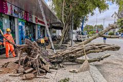 Strong winds, rains kill 2 in Mekong Delta, destroy houses, trees