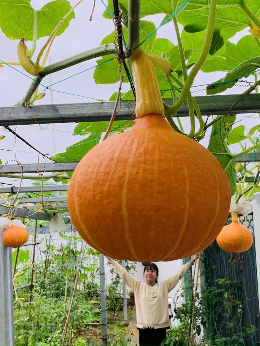 Mẹ 4 con cải tạo mảnh đất 300 m2 thành vườn trồng rau củ, hoa trái