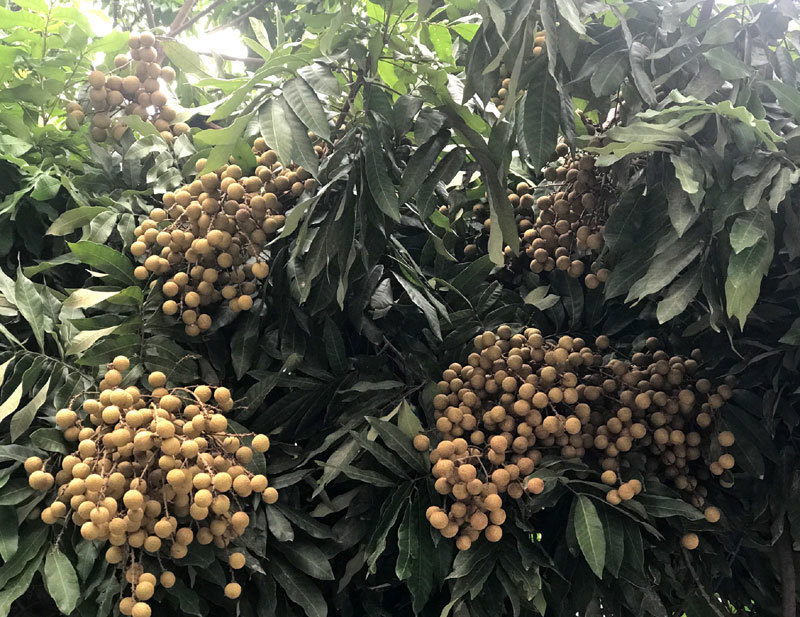 farm produce,Covid-19 impact,goods distribution