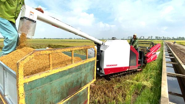 Máy gặt lúa Yanmar YH850 - công nghệ mới năng suất, tiết kiệm, hiệu quả