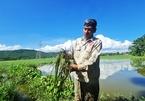 Thi công cao tốc lấp cống khiến 13ha lúa bị ngập ở Thanh Hóa