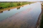 Lũ lụt nặng nề, nhiều nông dân Trung Quốc bỗng chốc tay trắng