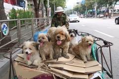 Đội quân chó nhặt giấy vụn ở Hàn