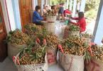 Hợp lực tiêu thụ nông sản cho 19 tỉnh miền Nam trong điều kiện giãn cách