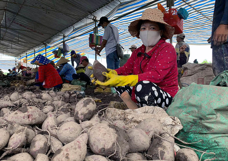 Southern provinces assisted to sell farm produce amid social distancing