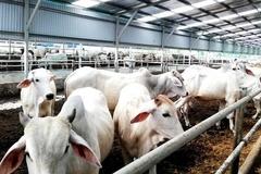 Thái Bình: Tăng cường kiểm tra, đảm bảo phát triển đàn gia súc an toàn dịch bệnh