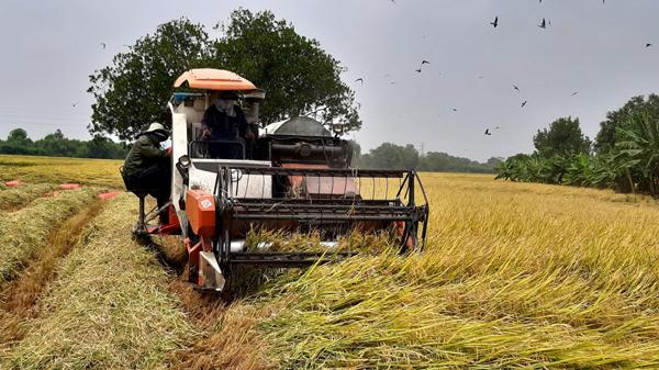 Tây Ninh 'gỡ khó' cho nông dân giữa tâm dịch