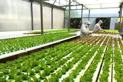 Chuyển đổi số trong nông nghiệp là yêu cầu cấp thiết