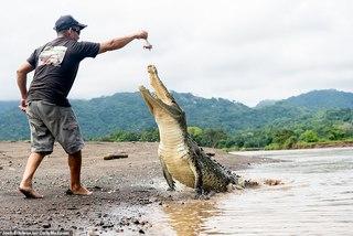 Vờn mõm cá sấu khổng lồ, chuyến vượt sông khủng khiếp nhớ đời