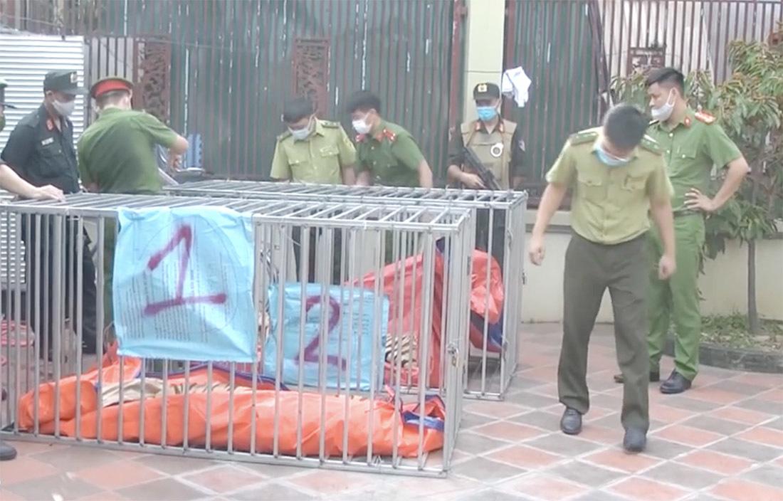 Hình ảnh chuồng sắt nhốt 17 con hổ như nuôi lợn trong nhà dân ở Nghệ An