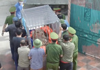 17 tigers illegally caged in Nghe An