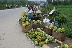 Gắn kế hoạch tiêu thụ nông sản với xúc tiến thương mại