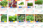 Cửa hàng bán hạt giống rau ăn nên làm ra, phát tài trong mùa dịch