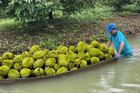 Lập gấp 'vùng xanh', lo cho 1,1 triệu tấn rau quả vào chính vụ