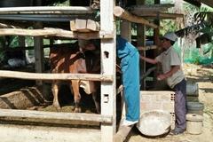 Thái Nguyên: Tiêm phòng vắc-xin là chiến lược hàng đầu để đẩy lùi dịch lở mồm long móng
