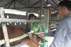 Củng cố hệ thống giám sát dịch bệnh động vật