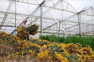 Da Lat's floriculture face unprecedented challenges