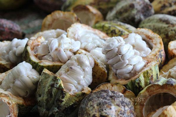 Loại vỏ trái cây là rác bỏ đi, bỗng thành hàng giá trị thu về tiền tỷ