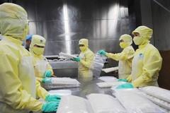 Mekong Delta provinces strive to maintain advantage of shrimp industry