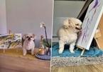Bức tranh được định giá gần 7.000 USD được vẽ bởi một chú chó