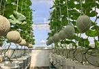 Vườn treo sân thượng thu 4 tạ quả/năm của ông bố ở Bình Dương