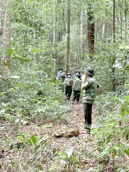 forest protection,wildlife protection