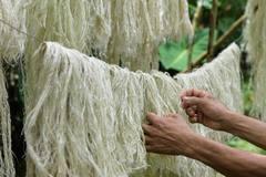 Biến lá dứa thành sợi để may hàng thời trang