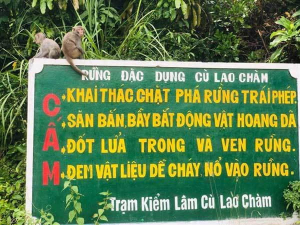 Monkeys cause chaos during social distancing orders on Cham Islands