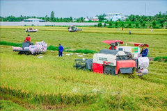 Commercial banks directed to aid rice industry amid pandemic
