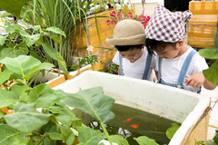 Trồng rau sân thượng tặng hàng xóm, làm khu vui chơi cho con mùa dịch Covid-19