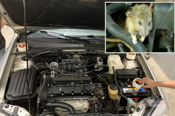Xe 'đắp chiếu' quá lâu, làm sao để chuột không vào làm tổ trong khoang máy?