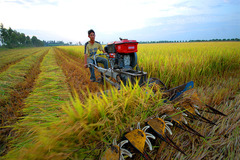 Ministry urges 'green' waterway passage for rice from Mekong Delta