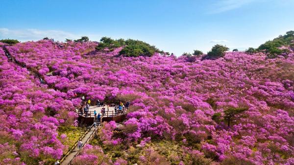 Đến Daegu, ngắm thiên đường hoa trên đỉnh núi Biseulsan