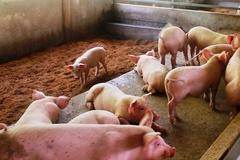 Nam Định mở rộng mô hình chăn nuôi hữu cơ, xây dựng vùng an toàn dịch bệnh